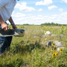 My father foraging blueberry pie blueberries in New Brunswick - photo - Karen Anderson