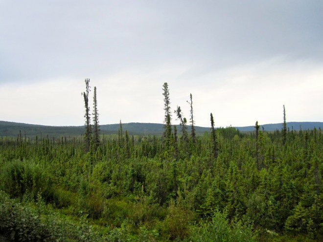 Black Spruce and Permafrost Bogs