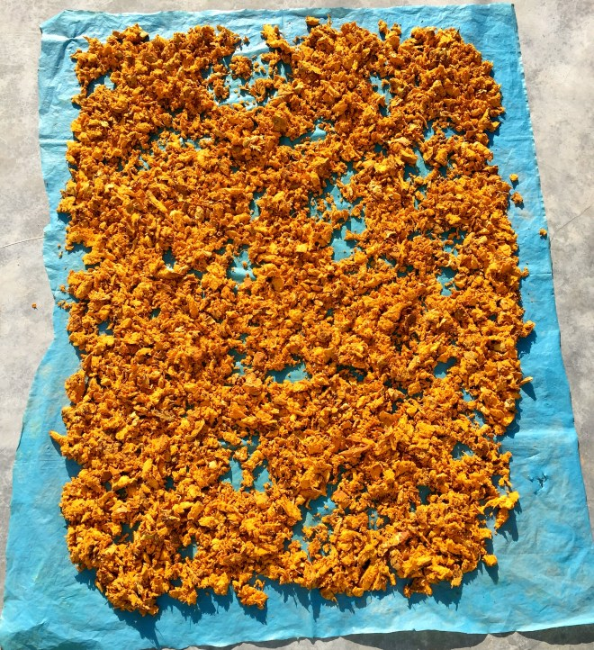 Turmeric drying - photo credit - Karen Anderson