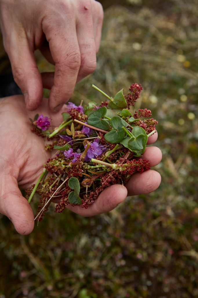Foraged Food in Northern Canada