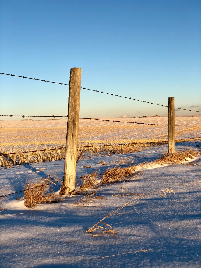alberta in winter, wide open plain