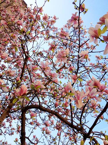 NYC-Flowers