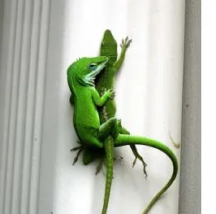 lizzard love_ecoworldly.com