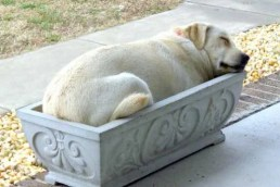 dog in planter