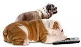 dogs watch tv