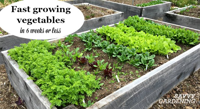 Growing fast growing crops in gardens and containers is an easy way to grow more food.