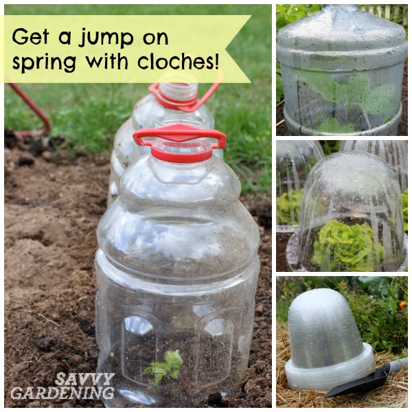 cloches let you plant in early spring