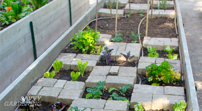 how to make a raised bed garden in toronto
