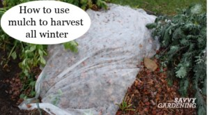 Root crops like carrots and beets can be harvested into winter with a mulch.