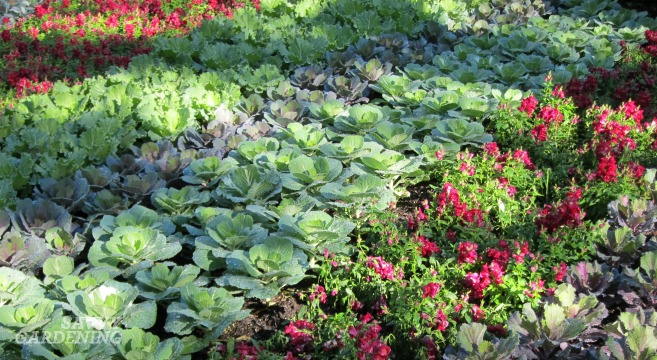Edibles and ornamentals together.