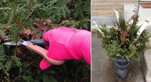 pruning branches for winter containers