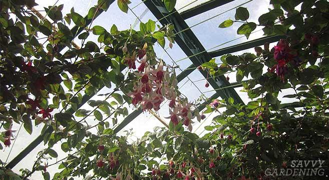 The Royal Greenhouse of Laeken