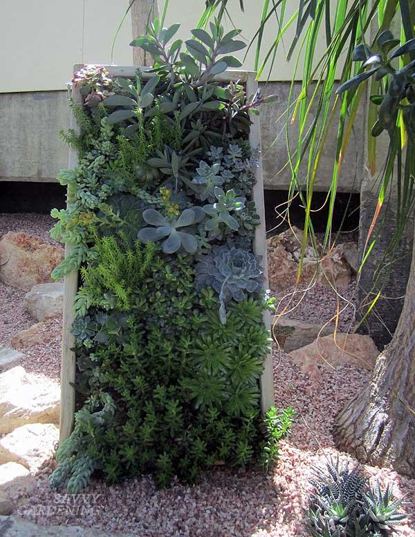 succulent frame