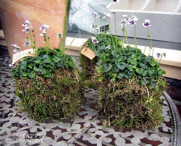 Moss pots outside of a flowershop in Venlo, Netherlands.
