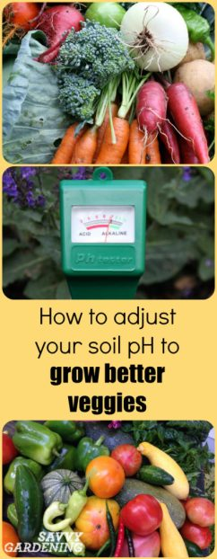What is soil pH and why does it matter so much?