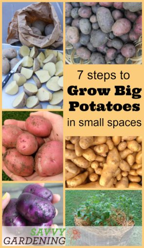 Grow potatoes in small spaces with this handy technique.