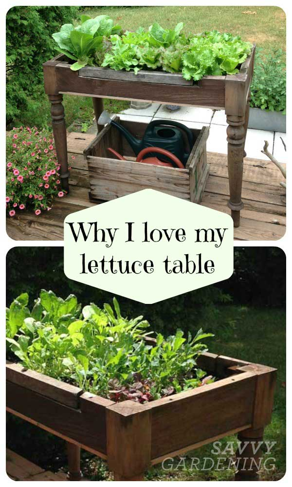 Make a lettuce table out of an old table