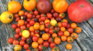 high-yield vegetables