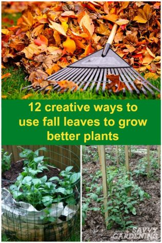 Use fall leaves to build squash rings, potato beds, worm bins, and more!