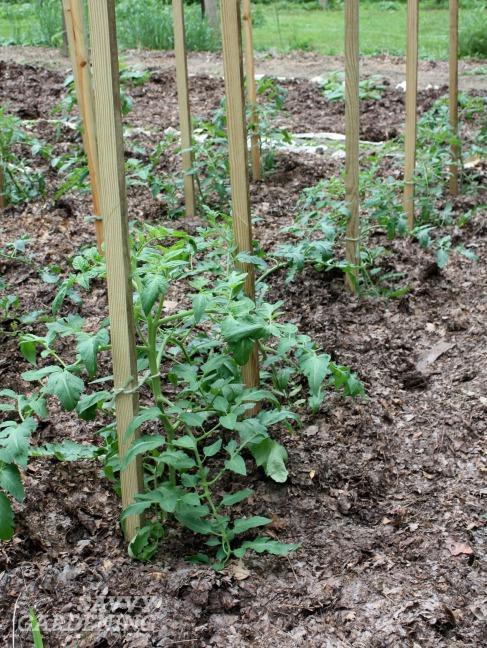 feeding garden soil 12 creative