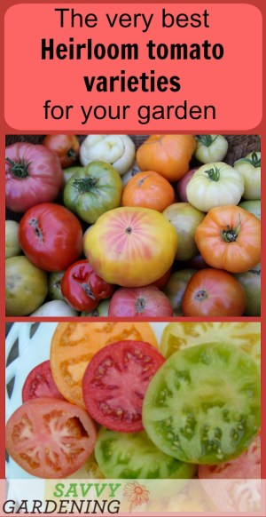 A list of the very best heirloom tomato varieties for your garden.