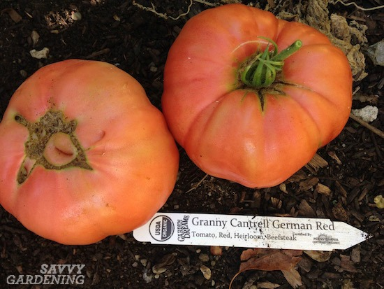 heirloom tomato 'Granny Cantrell'