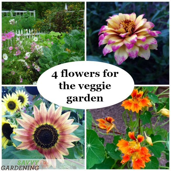 There are many benefits to planting flowers in your veggie garden; here are our four favourites!