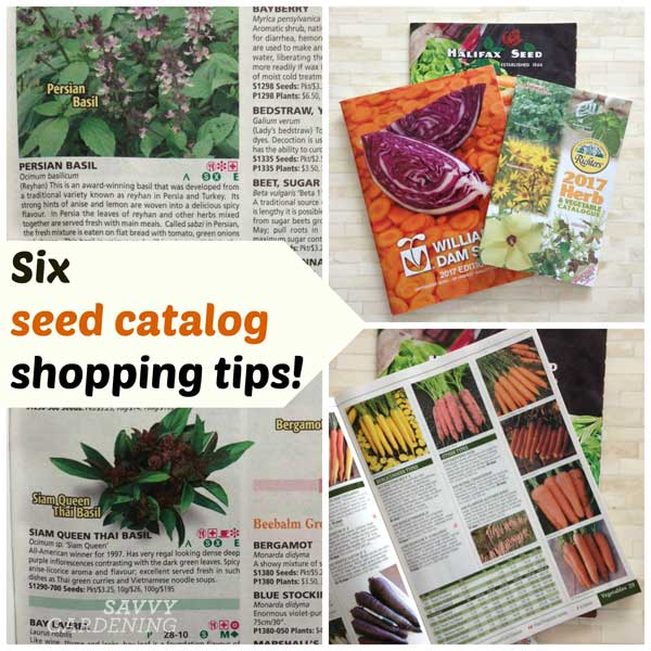 Seed catalogue shopping tips