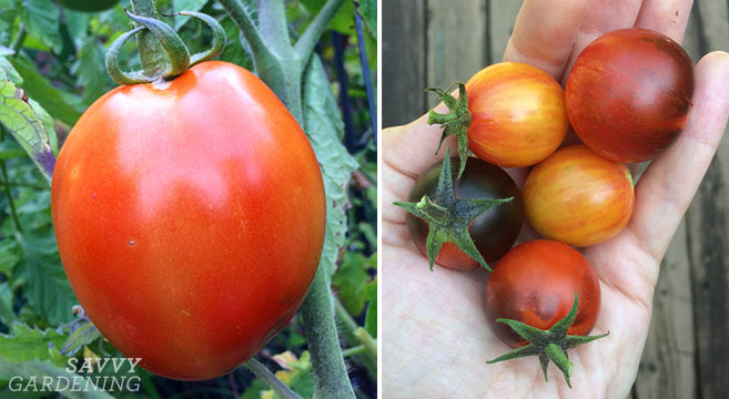 5 Tips For Growing Tomatoes In Raised Beds