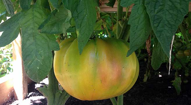 Small Raised Vegetable Garden Ideas