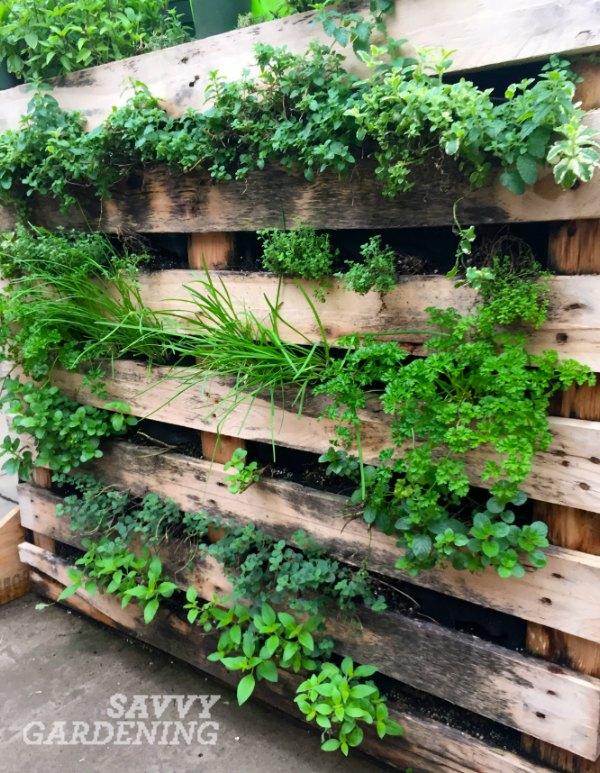 Etonnant Vertical Vegetable Garden