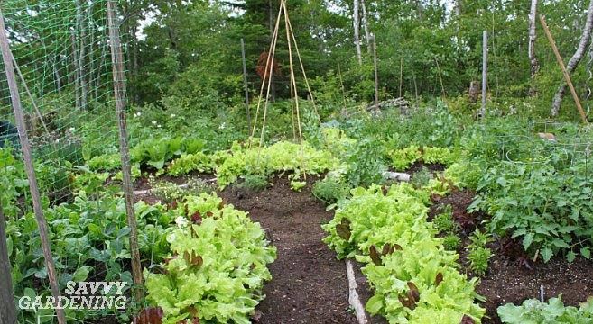 Shade Vegetable Garden Design Layout