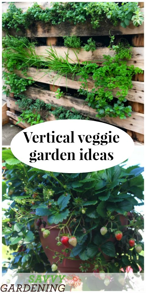 5 easy ways to grow vegetables and herbs vertically