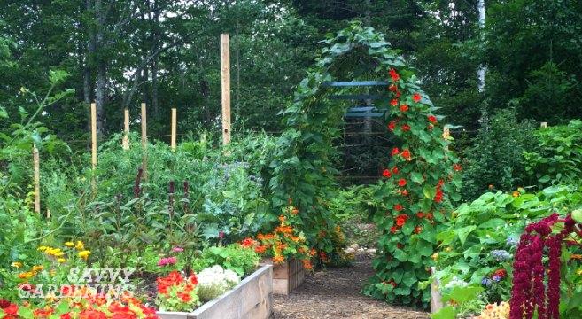 Steel Frame Garden Arch by Farm and Garden