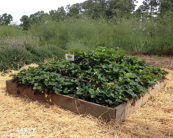 strawberry pyramid raised bed