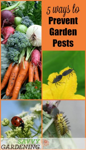 Tired of battling bad bugs in the garden? Use these 5 tricks for preventing pests in your garden & send them packing before they even take a single bite.