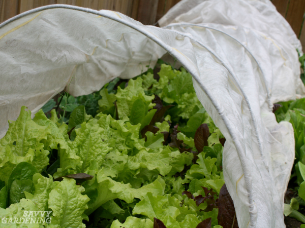 Use floating row cover to prevent pests from attacking plants.