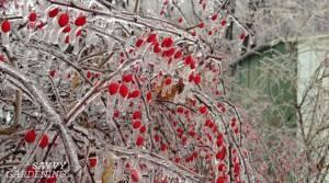 5 garden tips for the winter