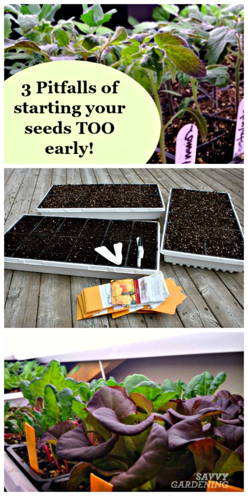 Starting your seeds too early is just as bad as starting them too late! (Savvy Gardening)