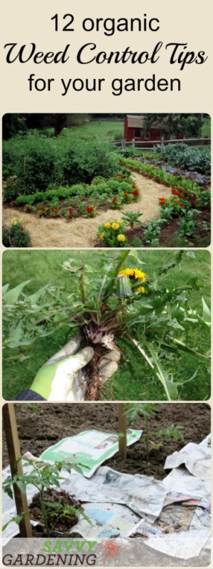 Useful and effective organic weed control tips to keep your garden weed free.