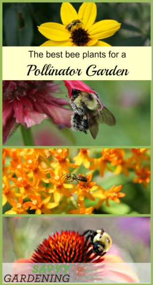 Quality pollinator gardens go beyond pretty flowers. The best bee plants offer a lot more than good looks. (AD)