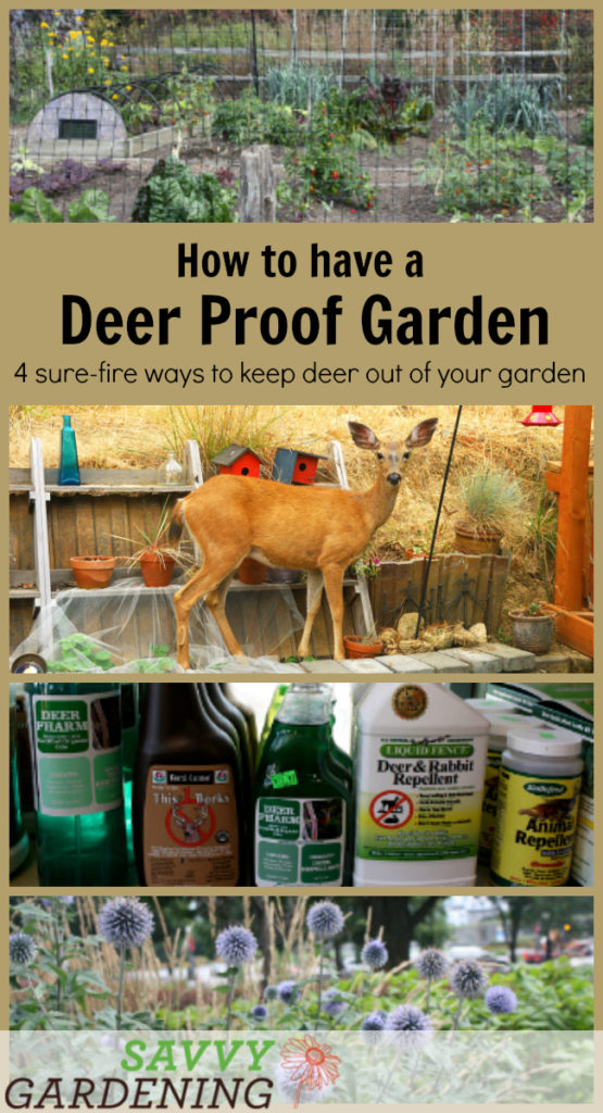Four useful and practical tactics to lead you toward a deer proof garden.