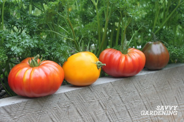 Get the facts on vegetable gardening and how you can save money by growing your own food.