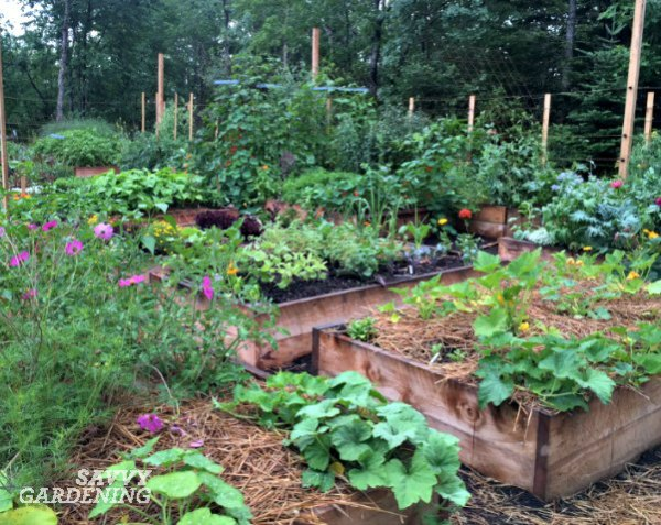 Get the facts on vegetable gardening.