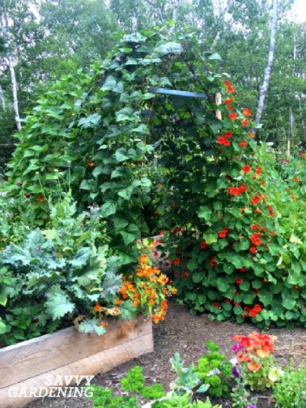 Three easy ways to grow more food!