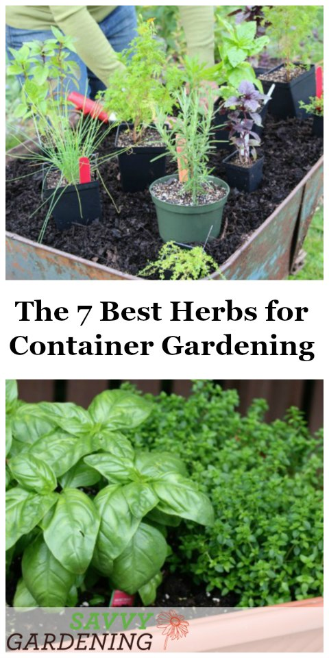 The 7 Best Herbs For Container Gardening.