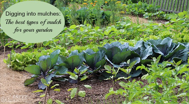Learn about different types of landscape mulch by digging into mulches with  us. - Digging Into Mulches: Types Of Landscape Mulch For Your Garden