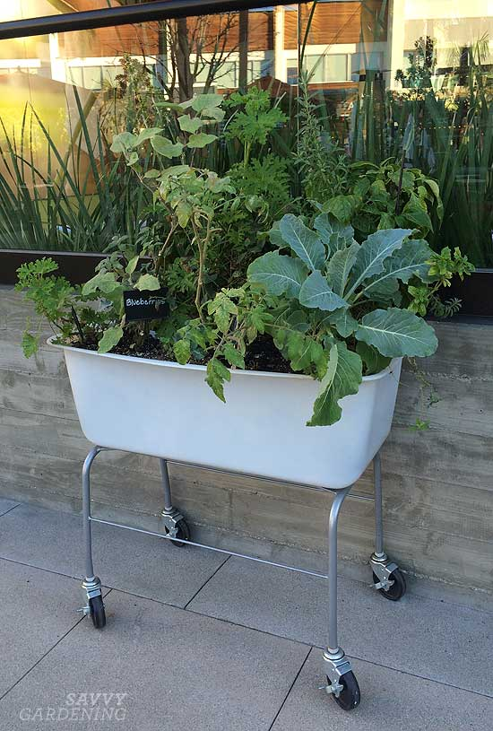 plastic washbasin raised bed