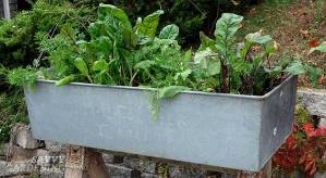 a washbasin raised bed