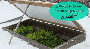 It's easy to grow fresh vegetables in winter when you pair the right crops with the right season extenders.